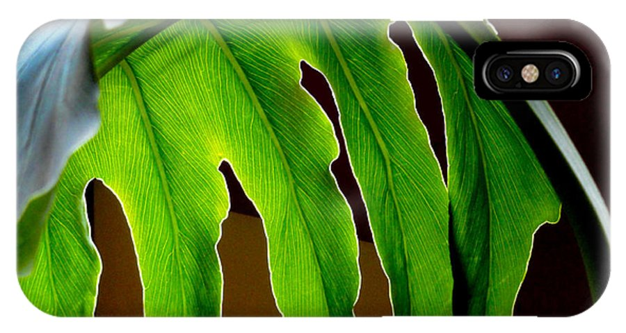 Frond IPhone X Case featuring the photograph Backlit Frond by Al Bourassa