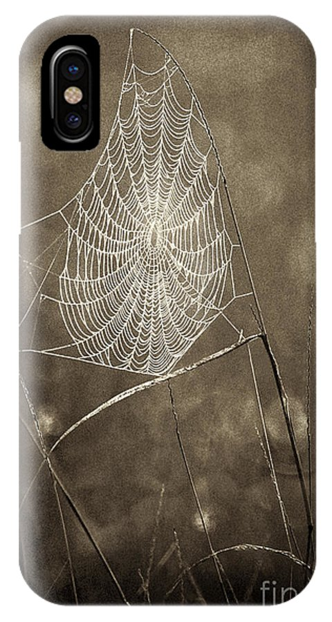 Wildlife IPhone X Case featuring the photograph Backlit Spider Web In Sepia Tones by Dave Welling