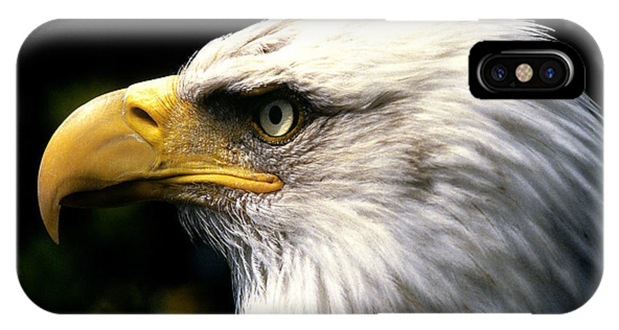 Horizontal IPhone X Case featuring the photograph Bald Eagle 2 by Jim Wallace