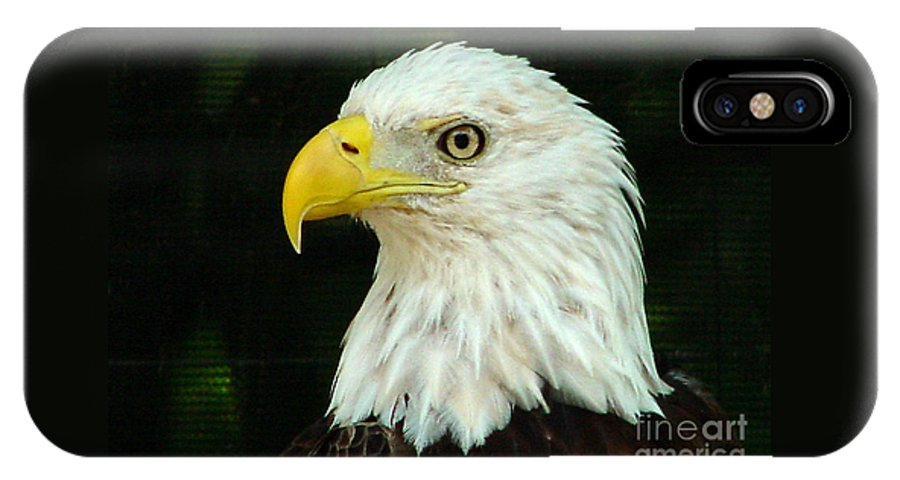 Eagle IPhone X Case featuring the photograph Bald Eagle-42 by Gary Gingrich Galleries