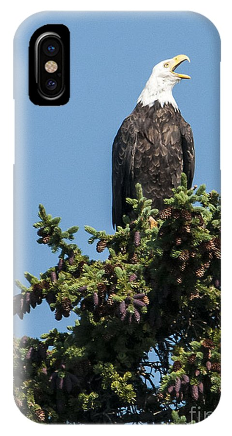Nature IPhone X Case featuring the photograph Bald Eagle by Bob Dowling