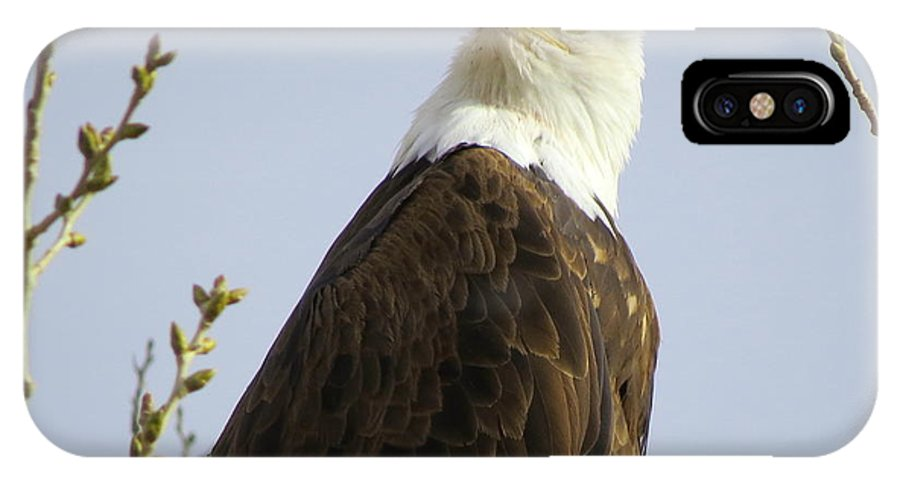 Bald Eagle IPhone X Case featuring the photograph Bald Eagle-c by MOKO Photo