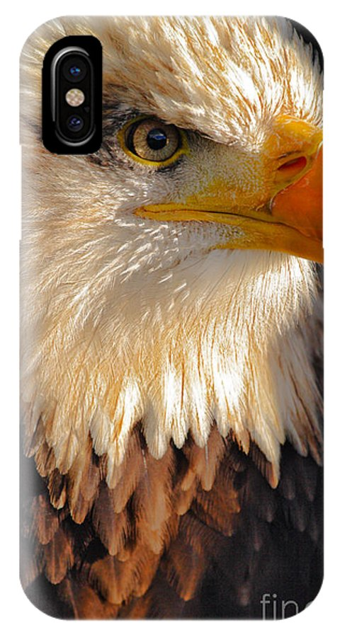 Bald IPhone X Case featuring the photograph Bald Eagle Close-up by Lynne Sutherland