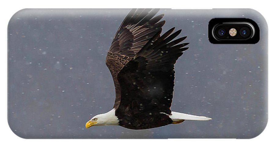 Bald Eagle Photo IPhone X Case featuring the photograph Bald Eagle Flight In Snow by Nathan Harker