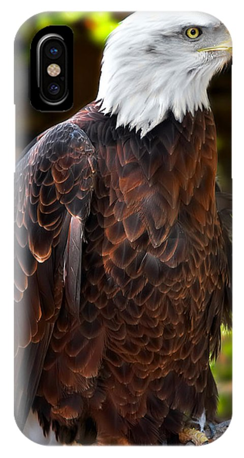 American Eagle IPhone X Case featuring the photograph Bald Eagle by Mary Almond