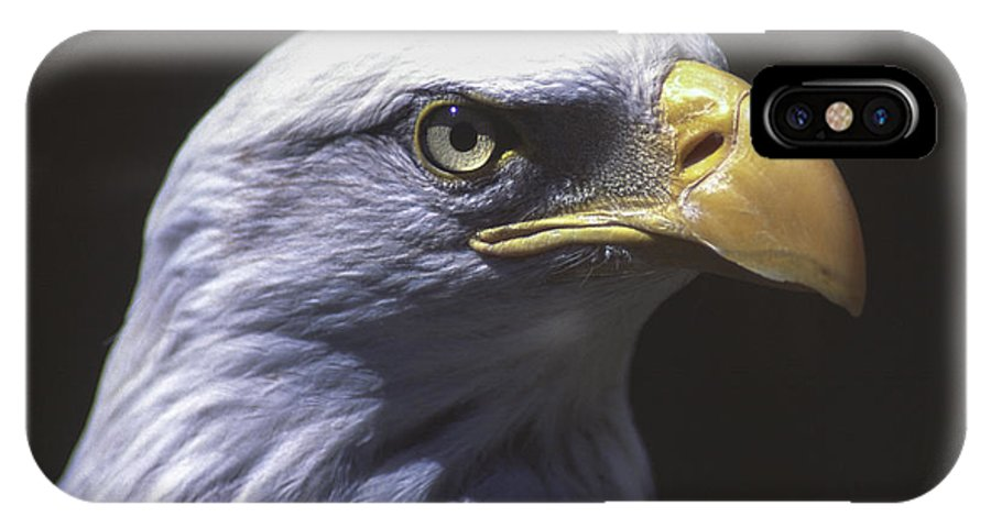 Bird IPhone X Case featuring the photograph Bald Eagle by Richard Kitchen