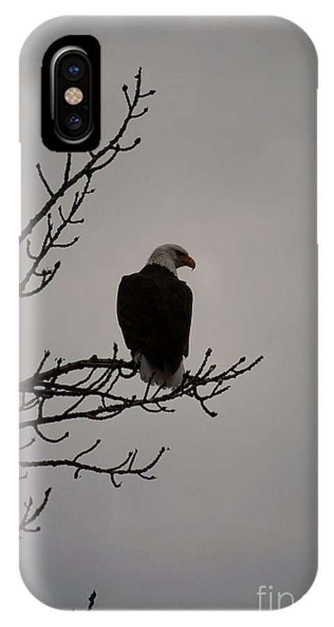 Bald Eagle IPhone X Case featuring the photograph Bald Eagle by Sharon Elliott