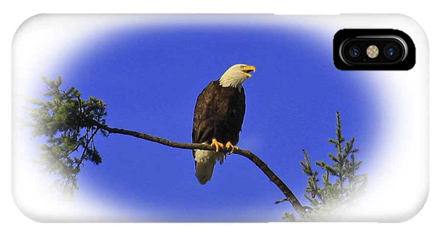 Bird IPhone X Case featuring the photograph Bald Eagle by Steven Baier