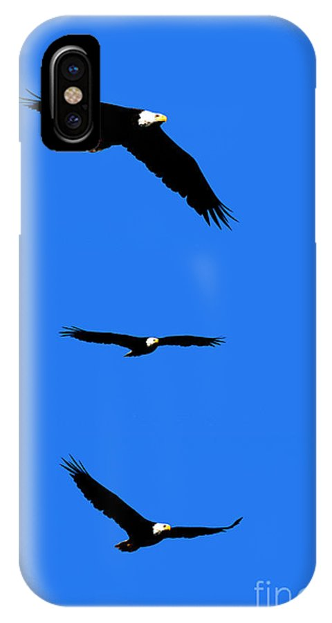 Eagle IPhone X Case featuring the photograph Bald Eagle Triptych by Thomas Marchessault