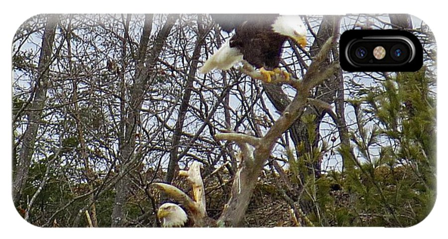 IPhone X Case featuring the photograph Bald Eagles At Nest by MTBobbins Photography