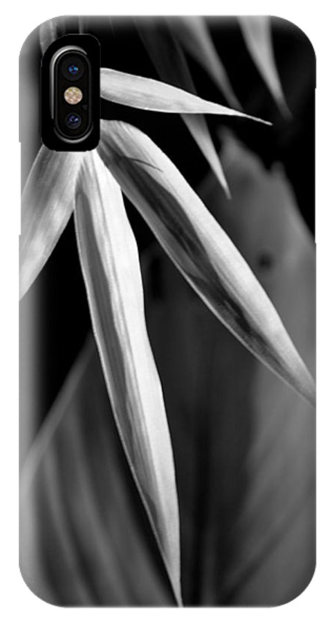 Musa IPhone X Case featuring the photograph Bamboo And Banana Leaves Black And White by Nathan Abbott