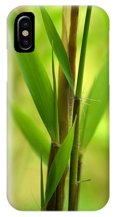 Bamboo IPhone X Case featuring the photograph Bamboo Branches Emerge by Nathan Abbott