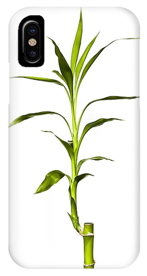 Jeff IPhone X Case featuring the photograph Bamboo by Jeff Burton