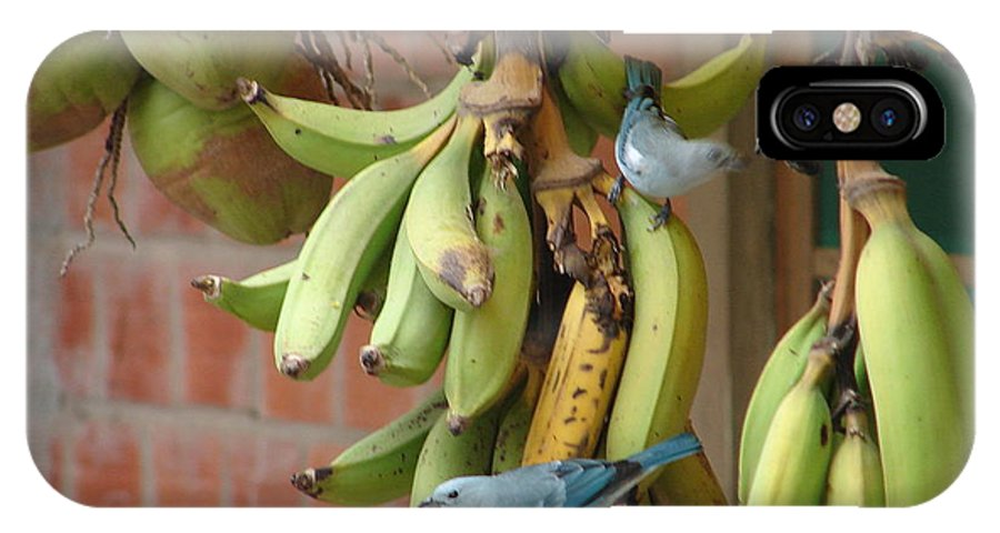 Birds IPhone X Case featuring the photograph Banana Birds by Lew Davis