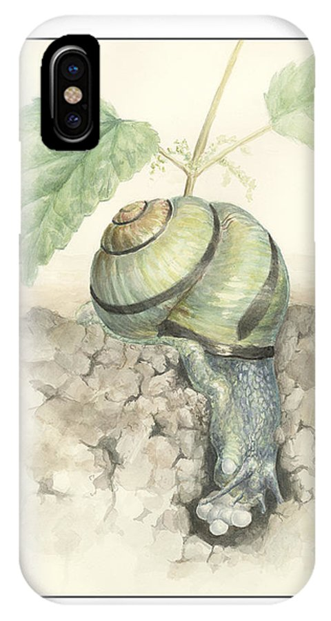 Banded Garden Snail IPhone X Case featuring the painting Banded Garden Snail by Megan Kunst