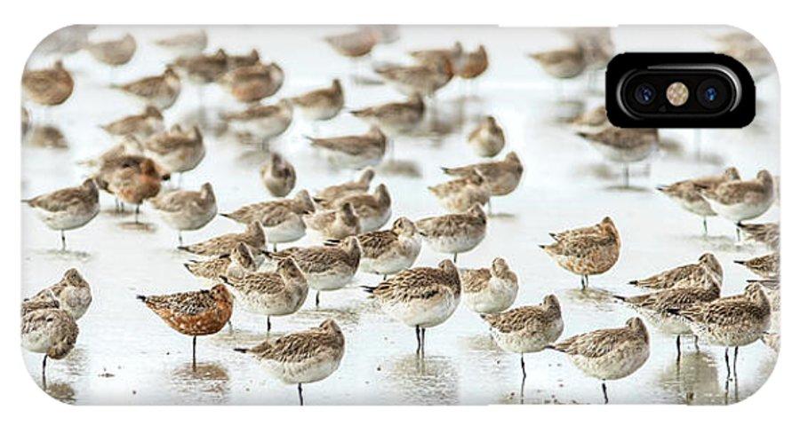 Bar IPhone X Case featuring the photograph Bar-tailed Godwit 19 by Kurien Yohannan