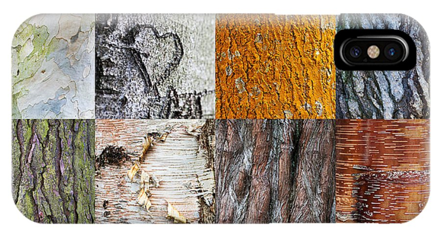 Tree IPhone X Case featuring the photograph Barking Up The Right Tree by Tim Gainey