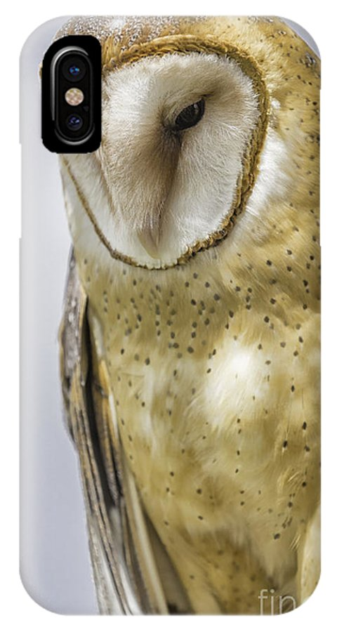 Bird Of Prey IPhone X / XS Case featuring the photograph Barn Owl by Michael Goodell