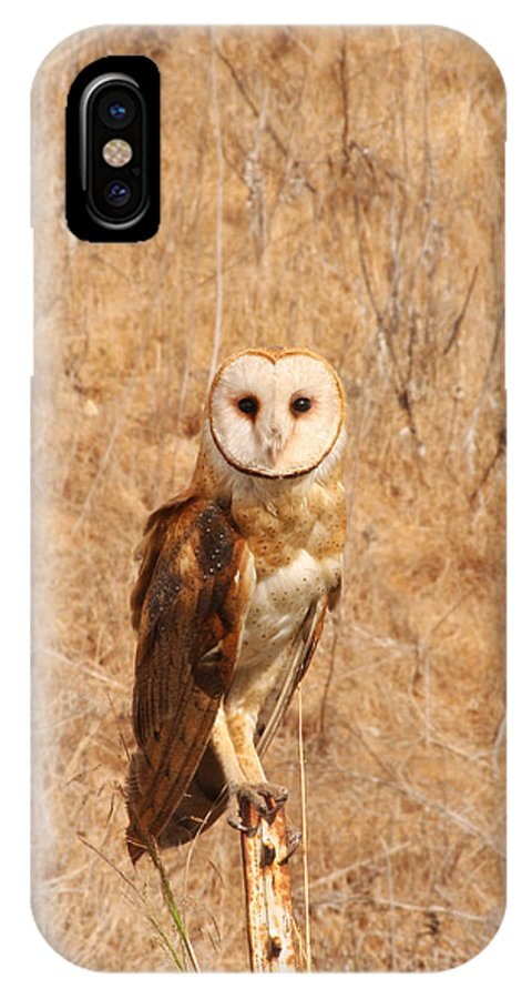 Owl IPhone X Case featuring the photograph Barn Owl Perching by Bob and Jan Shriner