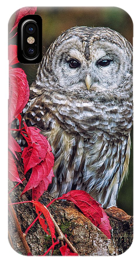 Barred Owl Photos IPhone X Case featuring the photograph Barred Owl II by Todd Bielby