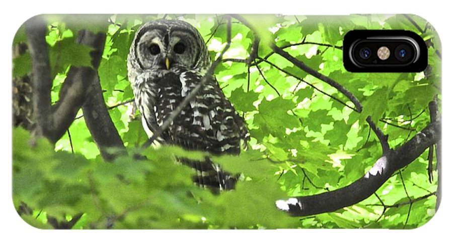 Barred Owl IPhone X Case featuring the digital art Barred Owl In Hiding by Leland Lewis