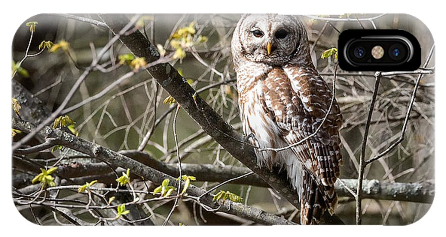 Owl IPhone X Case featuring the photograph Barred Owl Square by Bill Wakeley