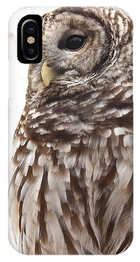 Owls IPhone X Case featuring the photograph Barred Owl by Tammy Schneider