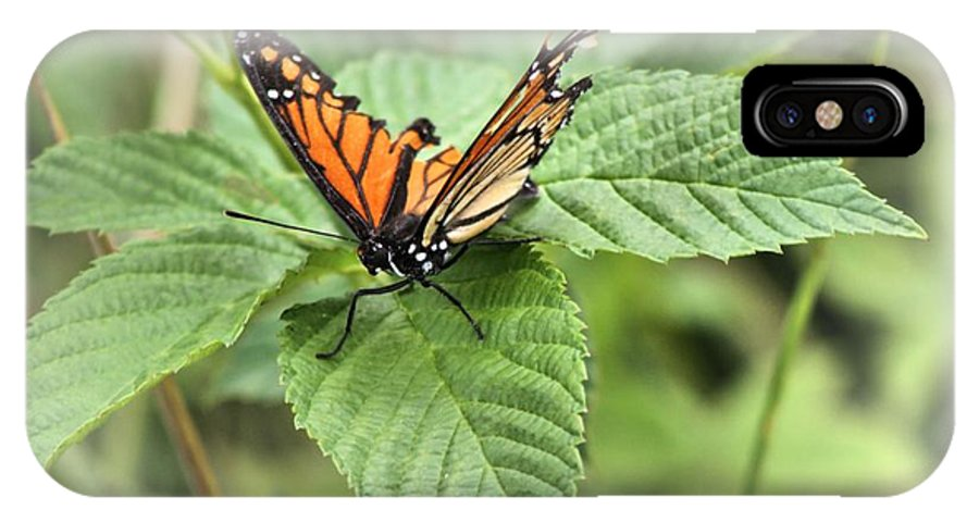 Butterfly Wings Photograph IPhone X Case featuring the photograph Battered Butterfly by Dan Sproul