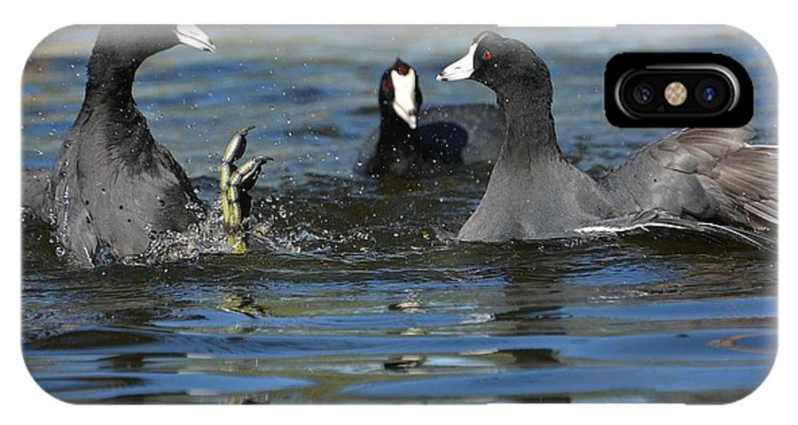 American Coots IPhone X Case featuring the photograph Battleground 2 by Fraida Gutovich