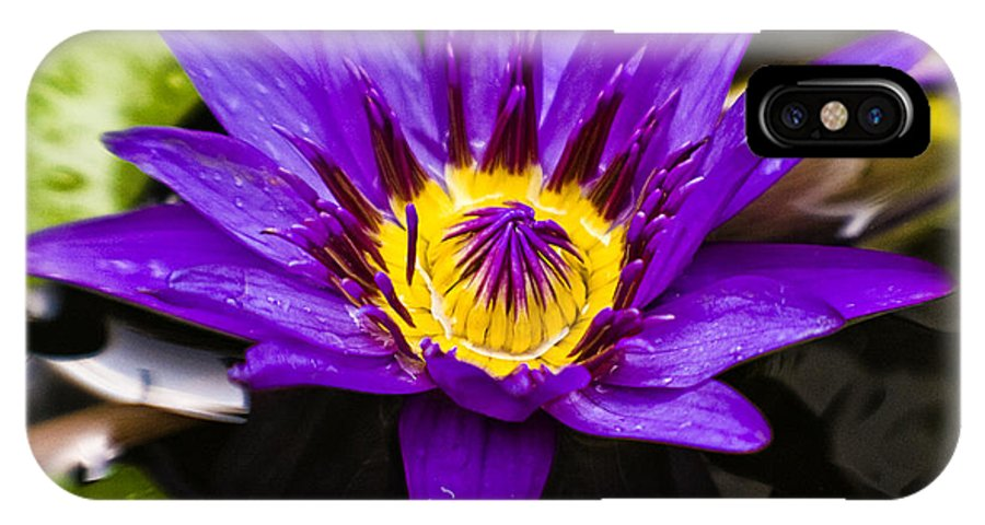 Lotus IPhone X Case featuring the photograph Bayou Beauty by Scott Pellegrin