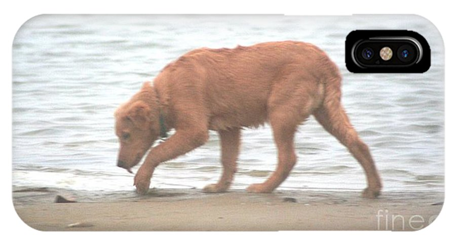 Golden Retriever IPhone X Case featuring the photograph Beach Comber by Teresa French
