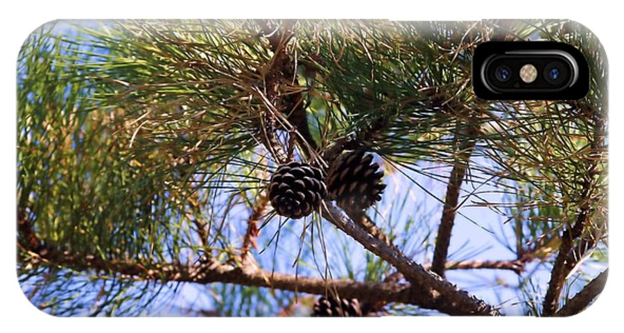 Pine Tree IPhone X Case featuring the photograph Beach Pine by Robert McCulloch