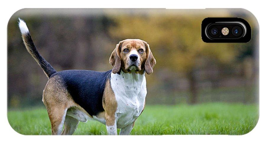 Beagle IPhone X / XS Case featuring the photograph Beagle Dog by Johan De Meester
