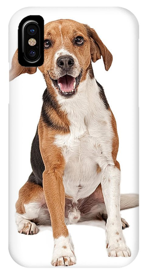 Beagles IPhone X Case featuring the photograph Beagle Mix Dog Isolated On White by Susan Schmitz