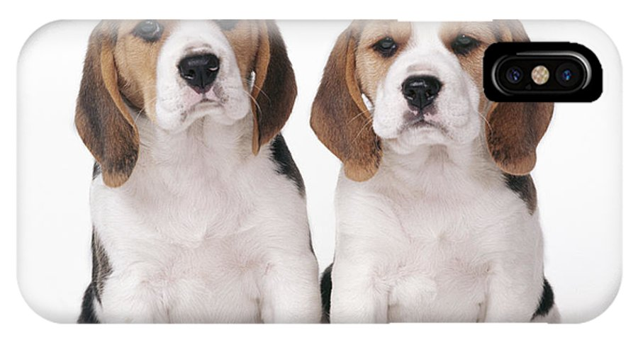 Dog IPhone X Case featuring the photograph Beagle Puppy Dogs by John Daniels