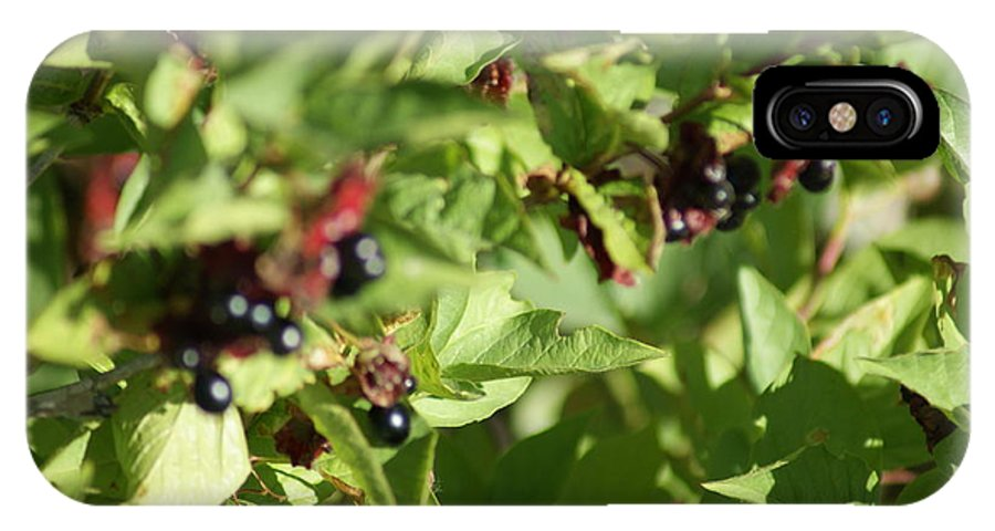 Bear Berries; IPhone X Case featuring the photograph Bear Berries by Donald Brinkman