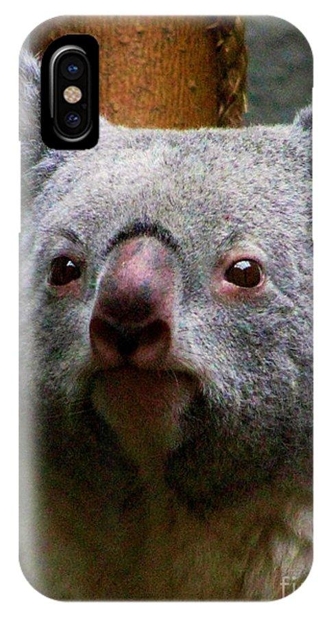 Koala Bear Bears Ohio Rlclough Zoo Zoos IPhone X Case featuring the photograph Bears In Ohio. No.19 by RL Clough