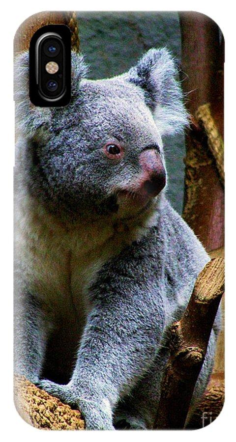 Koala Bear Bears Ohio Zoo Zoos Rlclough IPhone X Case featuring the photograph Bears In Ohio. No.20 by RL Clough