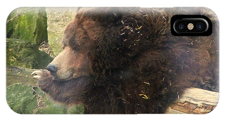 Bears Bear Brown Ohio Rlclough Zoo Zoos IPhone X Case featuring the photograph Bears In Ohio. No.23 by RL Clough