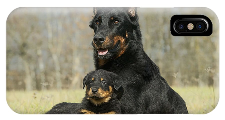 Beauceron With Puppy Dog Iphone X Case For Sale By Jean Michel Labat