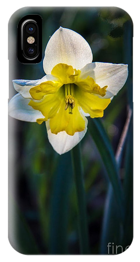 Amaryllis Family IPhone X Case featuring the photograph Beautiful Narcissus by Robert Bales