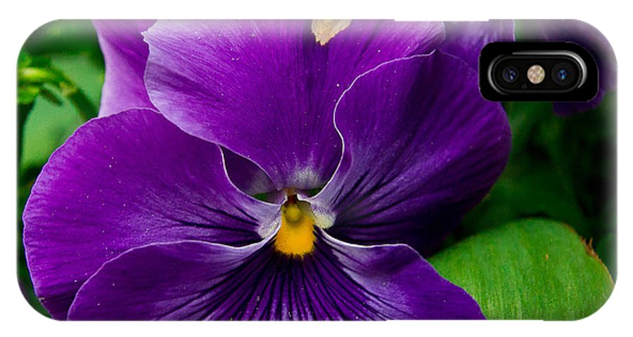 Pansy IPhone X Case featuring the photograph Beautiful Purple Pansies by Eti Reid