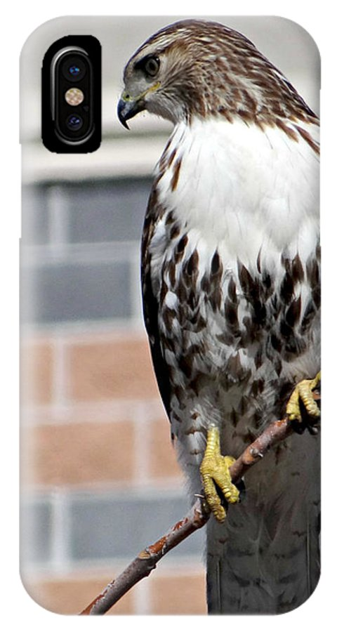 Beautiful Red-tail IPhone X Case featuring the photograph Beautiful Red-tail by Brenda Conrad