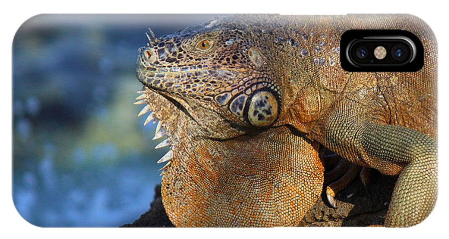 Iguana IPhone X Case featuring the photograph Beauty And Beast by Silke Brubaker