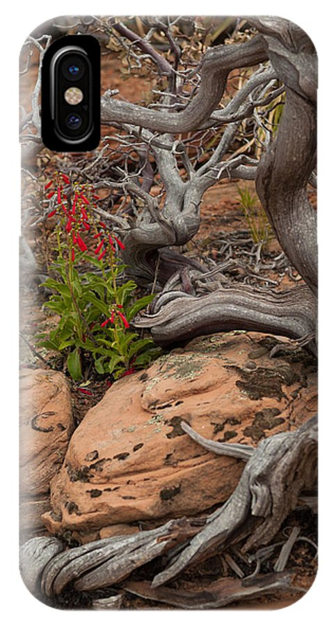 Firecracker Penstemon IPhone X Case featuring the photograph Beauty And The Beast by Steve Wile