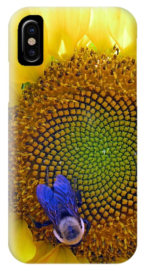 Sunflower IPhone X Case featuring the photograph Beauty And The Bee by Laura Corebello
