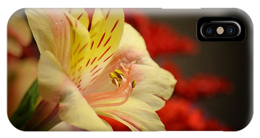 Beauty Beheld IPhone X Case featuring the photograph Beauty Beheld by Maria Urso
