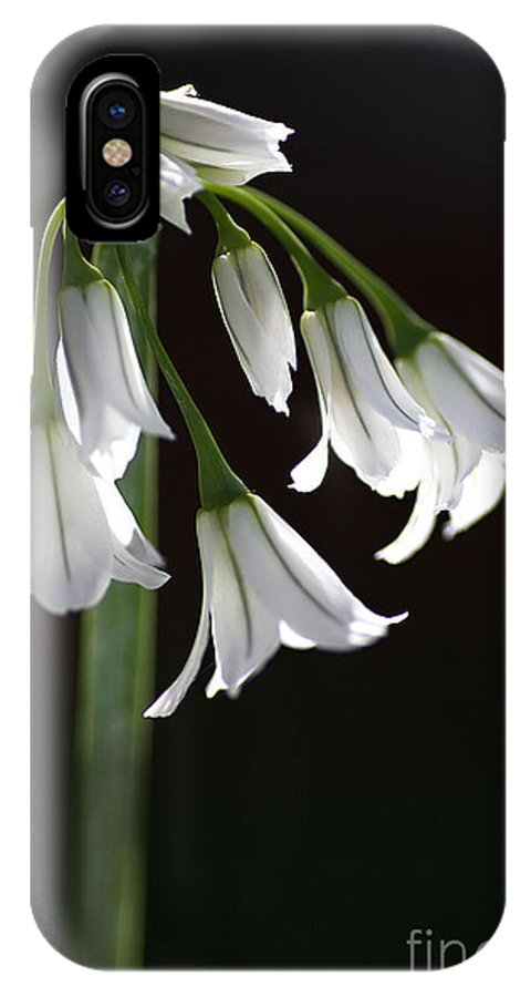 Snowdrop Flowers IPhone X Case featuring the photograph Beauty Of The Snowdrops by Joy Watson