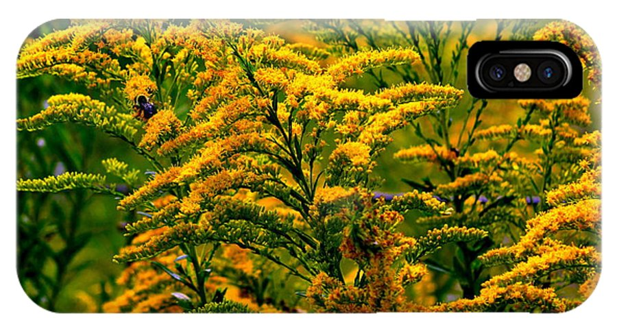 Flower IPhone X Case featuring the photograph Bee And Goldenrod by Kathy Barney
