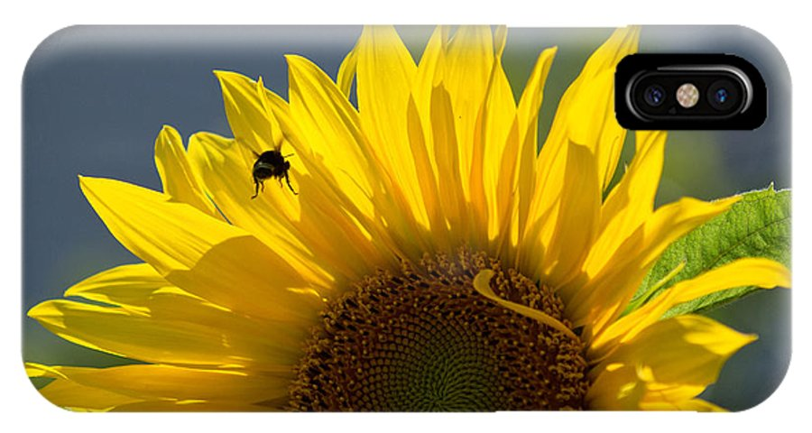 Bee IPhone X Case featuring the photograph Bee In Sunflower by Remy Gervais